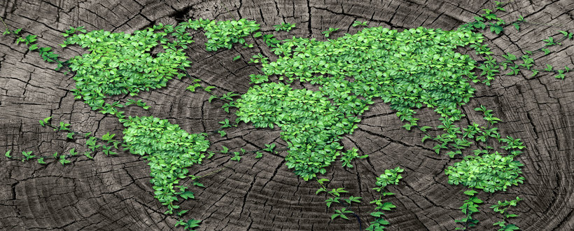 40871179 - global spread concept and development as a business concept with a map of the world made of an organized group of persistent vine leaves growing on a dead tree trunk as an environmental conservation symbol and icon for renewal.
