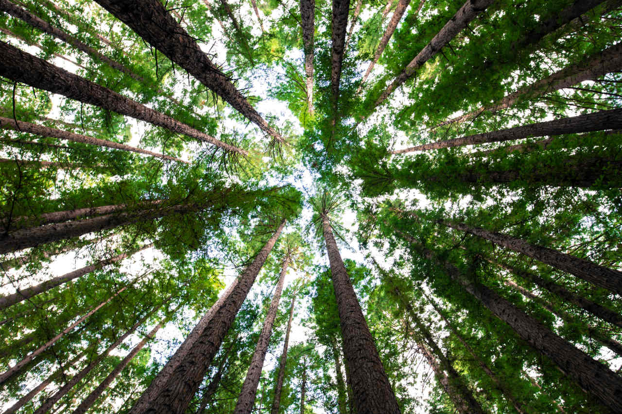 In this blog, we look at trees and climate change. Alongside more technical solutions, have we been ignoring the simple power of nature to heal itself?